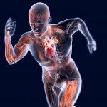 Proteggere i Muscoli dall'Allenamento