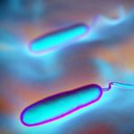 Prevenzione Probiotica