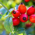Vitamina C e Rame in Tricologia