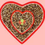 Il Magnesio nelle patologie cardiache