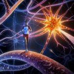 Esercizio Fisico e Risposta Immunitaria